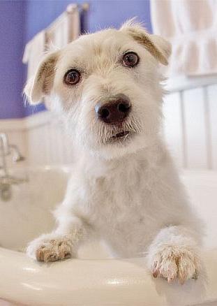 chien-dans-la-baignoire-126949